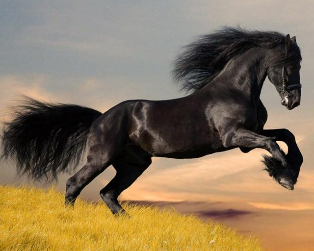 Wallpapers-Horse